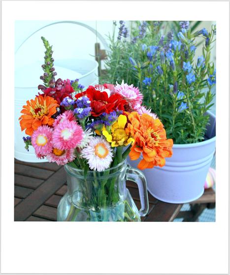 Garten Fräulein: Friday Flowerday # 36