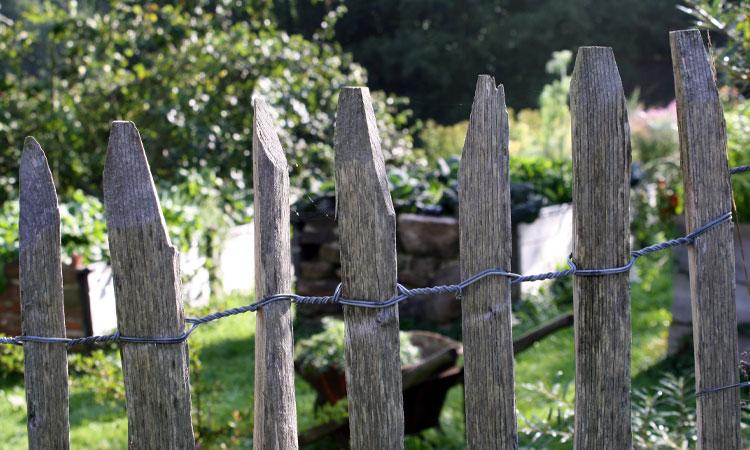 Zaun-Nachbarn
