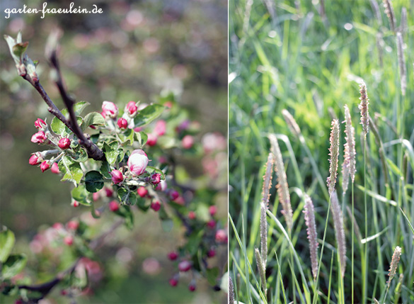 Blüten&Gras
