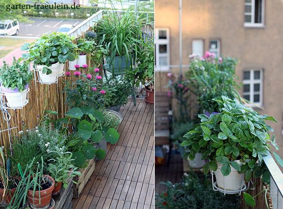Balkon Und Kã¼Belpflanzen | Unseren Mein Balkon Garten Blog Elektrosystem