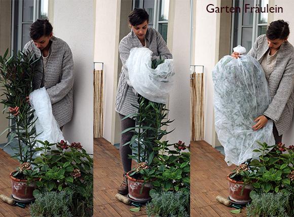 Kübelpflanzen überwintern