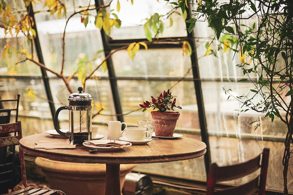 Kaffeesatz dünger
