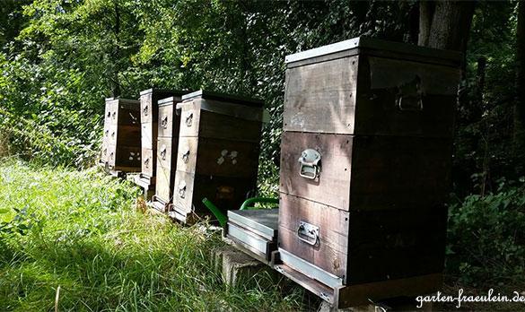Bienenkästen am Waldrand