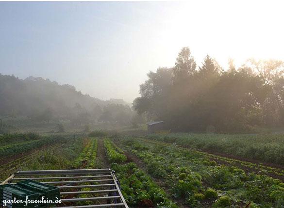 Gemüsefeld