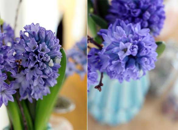 Hyazinthen-Blüten