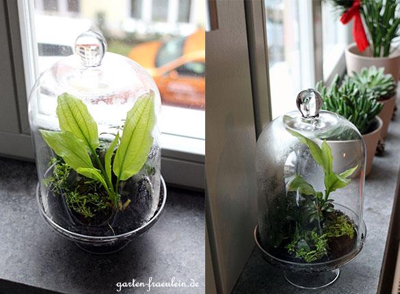 Wasserpflanzen-Wohnung