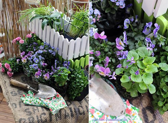 Frühlingsblüher am Balkon