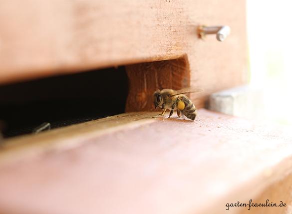 Biene-vor-Bienenbox