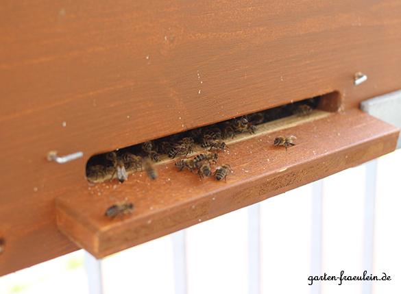 Bienen-am-Flugloch
