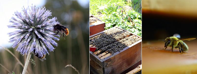 Warum ein bienenfreundlicher garten das beste design f r for Bienenfreundlicher garten