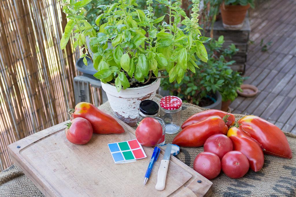 tomatensamen-ernten