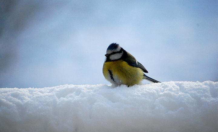 Vogelfutter-04-Vogel