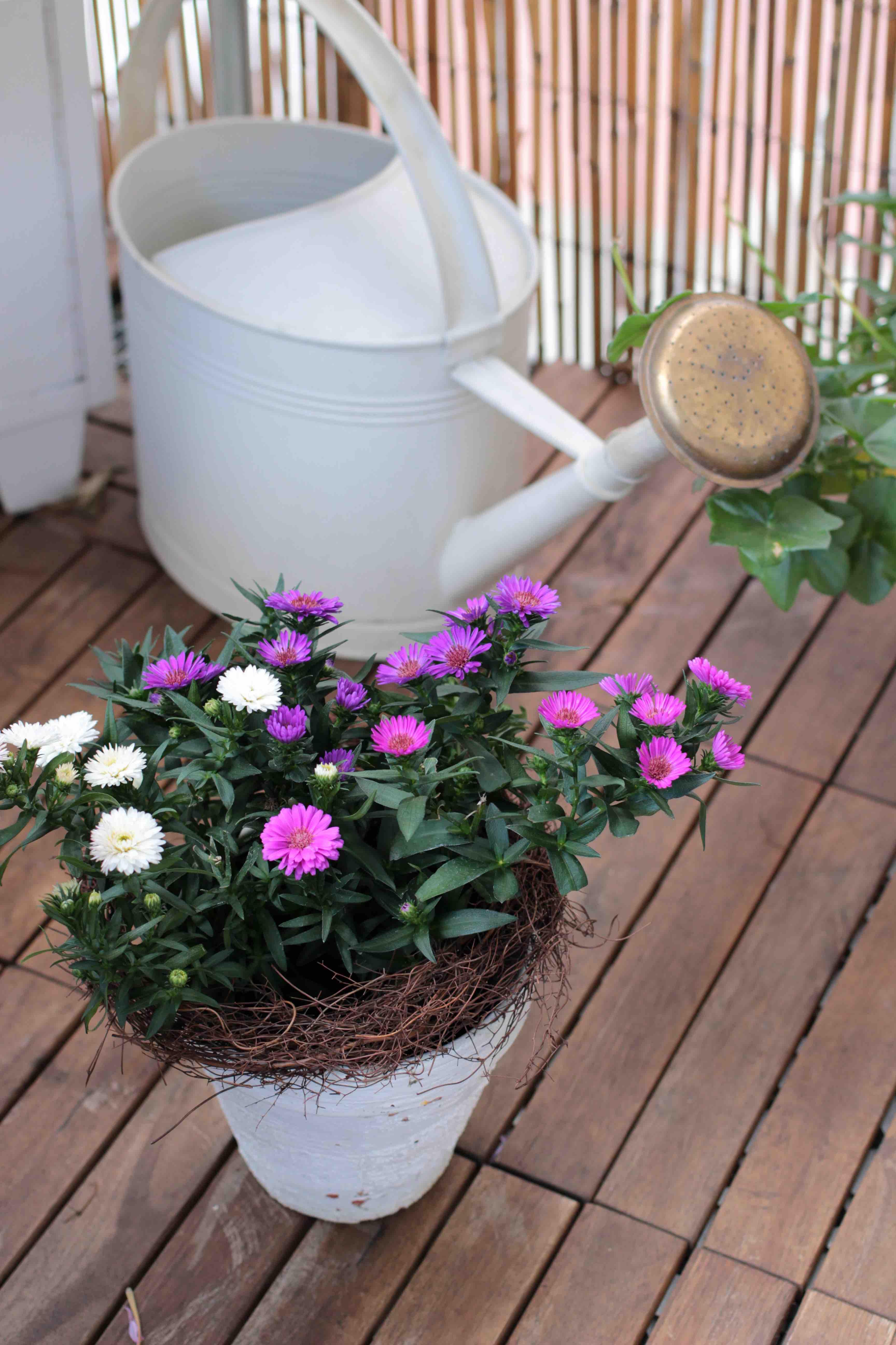 herbst balkonbepflanzung