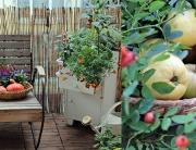 herbst-am-balkon
