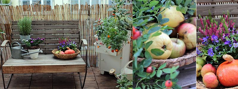 Herbst am balkon jetzt auf dem garten blog vom garten fr ulein - Herbstdeko fur den tisch ...