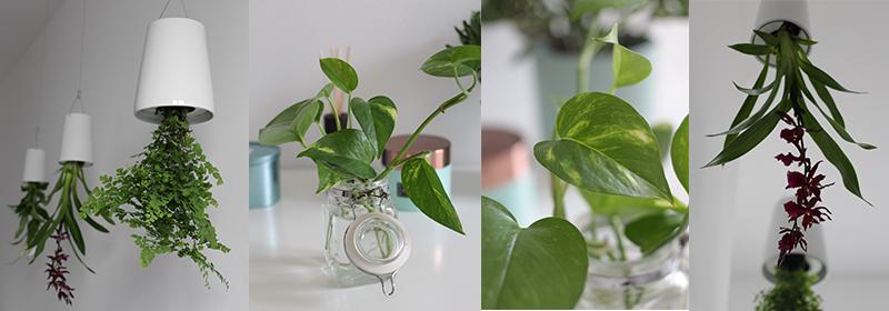 Pflanzen Badezimmer mein grünes badezimmer garten fräulein der garten