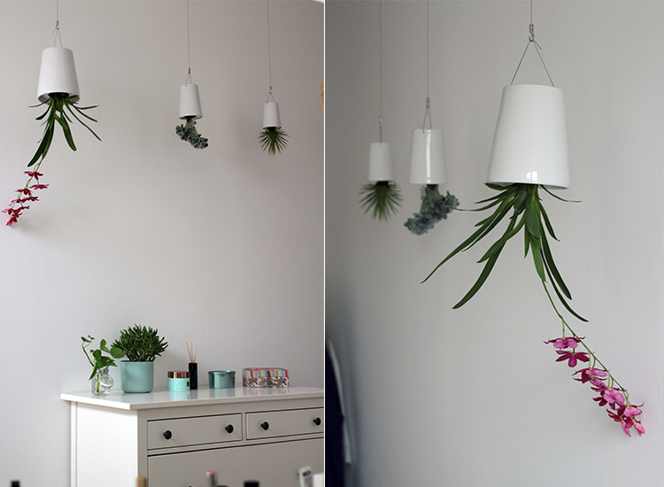 sky planter pflanzen
