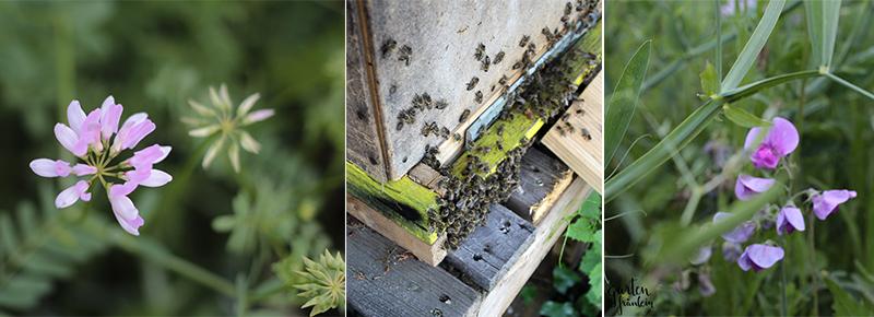 welttag der Honigbiene