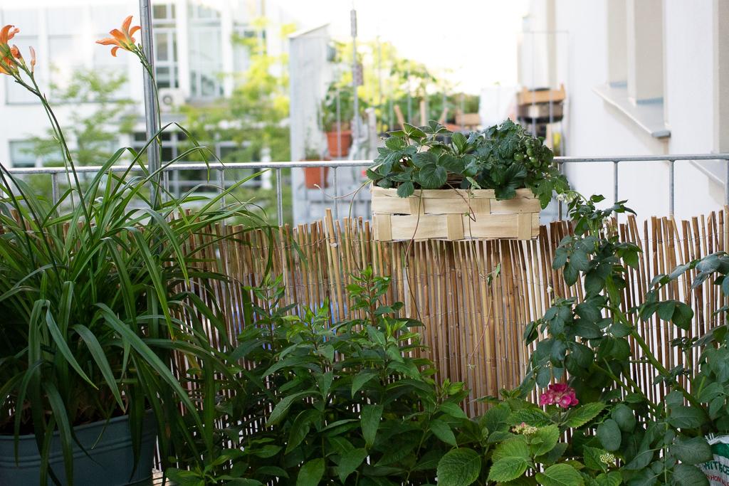 Mein Kreativer Stadtbalkon Da Balkonbuch Vom Garten Fräulein