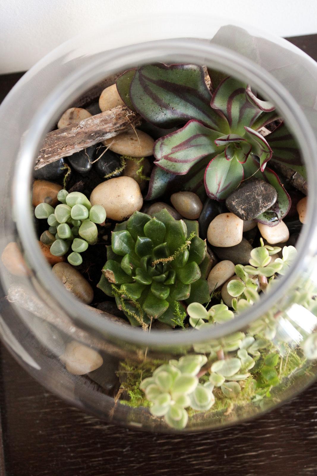 zimmerpflanzen wohnzimmer - Bild Wohnzimmer Erschrecken