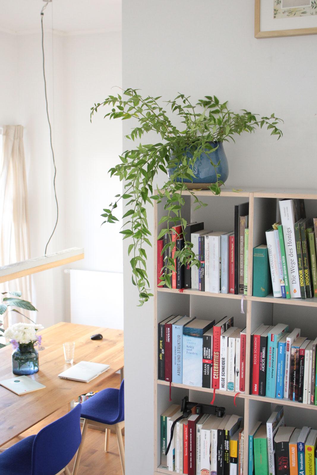 Zimmerpflanzen Wohnzimmer