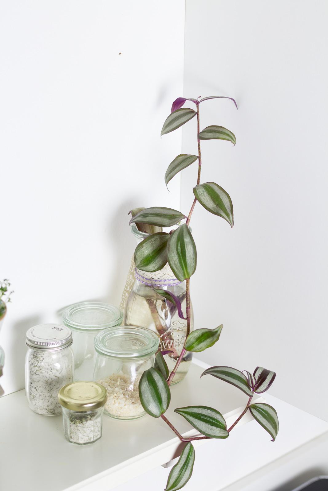 pflanzen k che wenig licht mischbatterie k che mit ger teanschluss ikea aufbewahrung glas. Black Bedroom Furniture Sets. Home Design Ideas