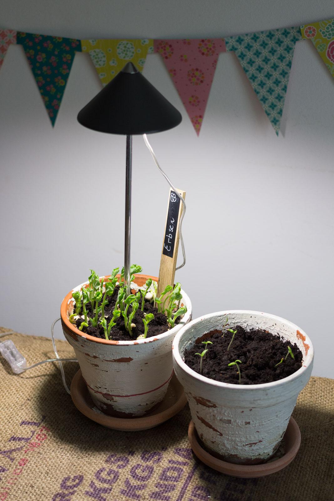 pflanzen vorziehen wie die profis garten fr ulein der garten blog. Black Bedroom Furniture Sets. Home Design Ideas