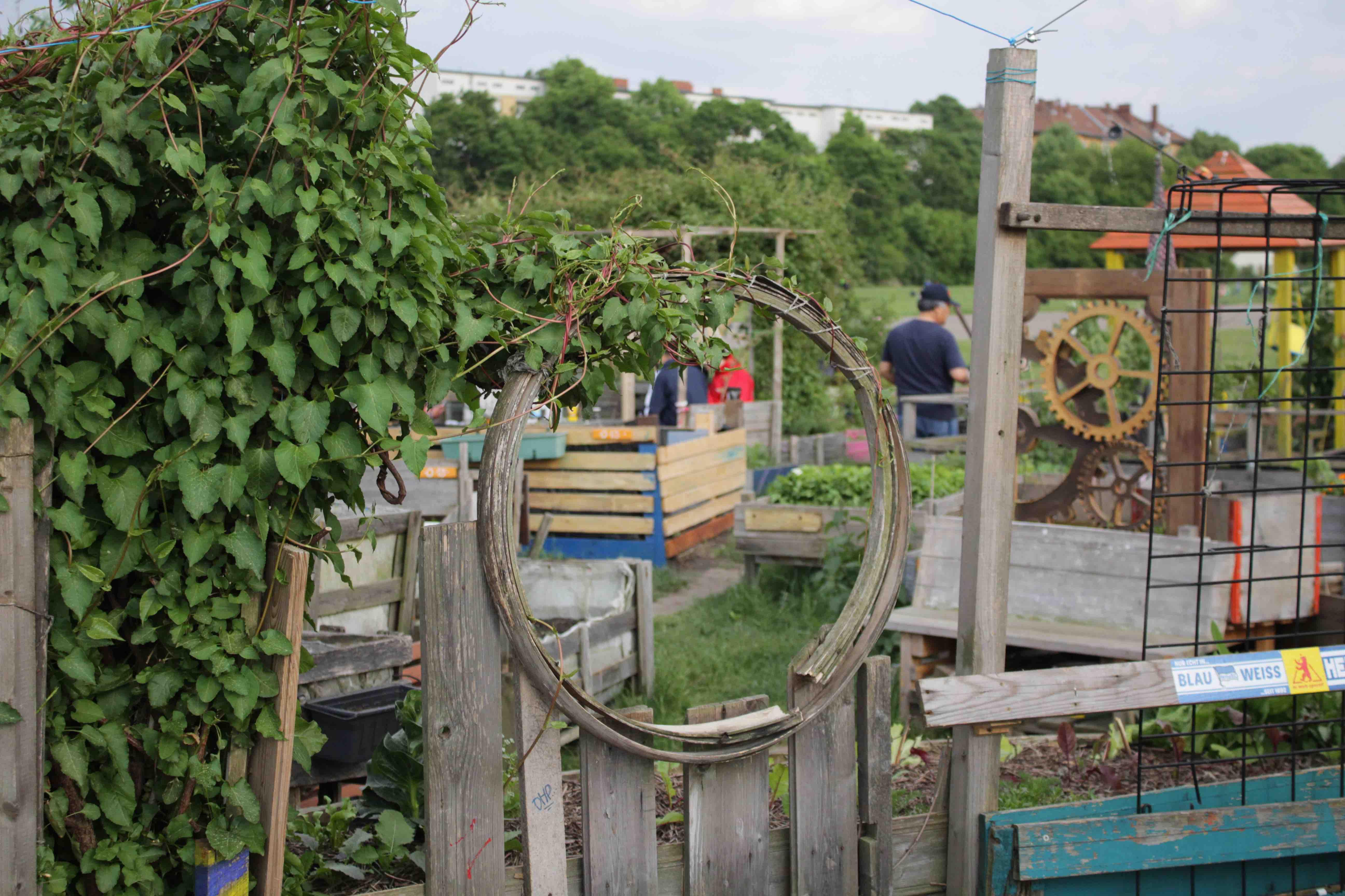 Mein Kleiner Stadtgarten Garten Fräulein Der Garten Blog