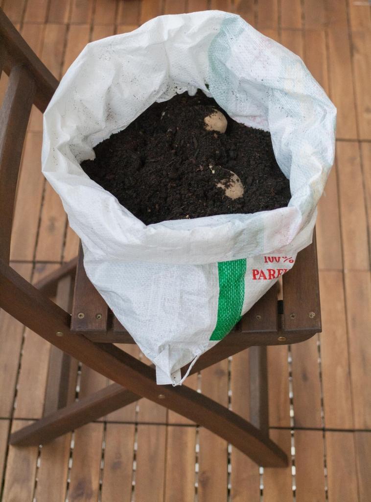 Kartoffeln im Sack anbauen