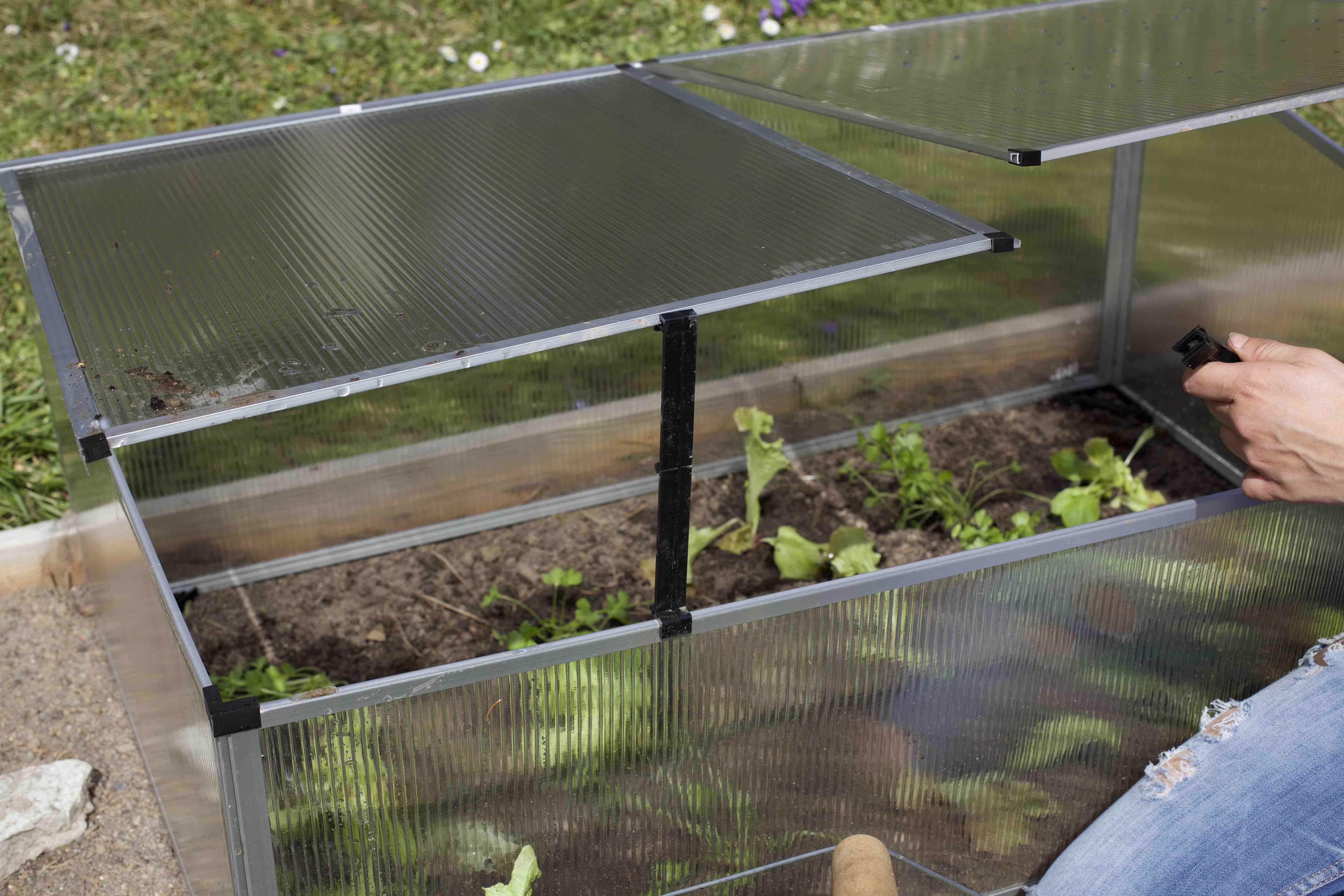 der fr he g rtner erntet den salat alles zum fr hbeet. Black Bedroom Furniture Sets. Home Design Ideas