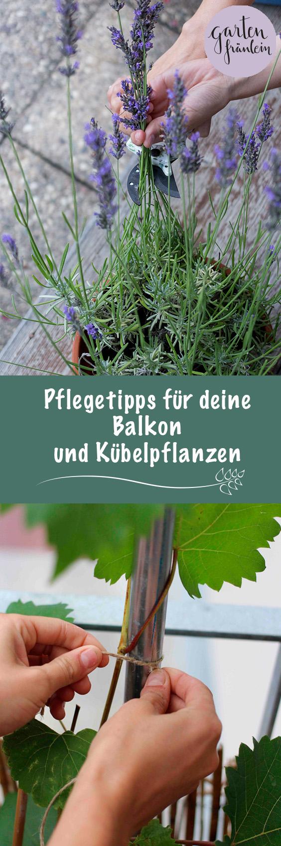 Pflegetipps-Balkonpflanzen