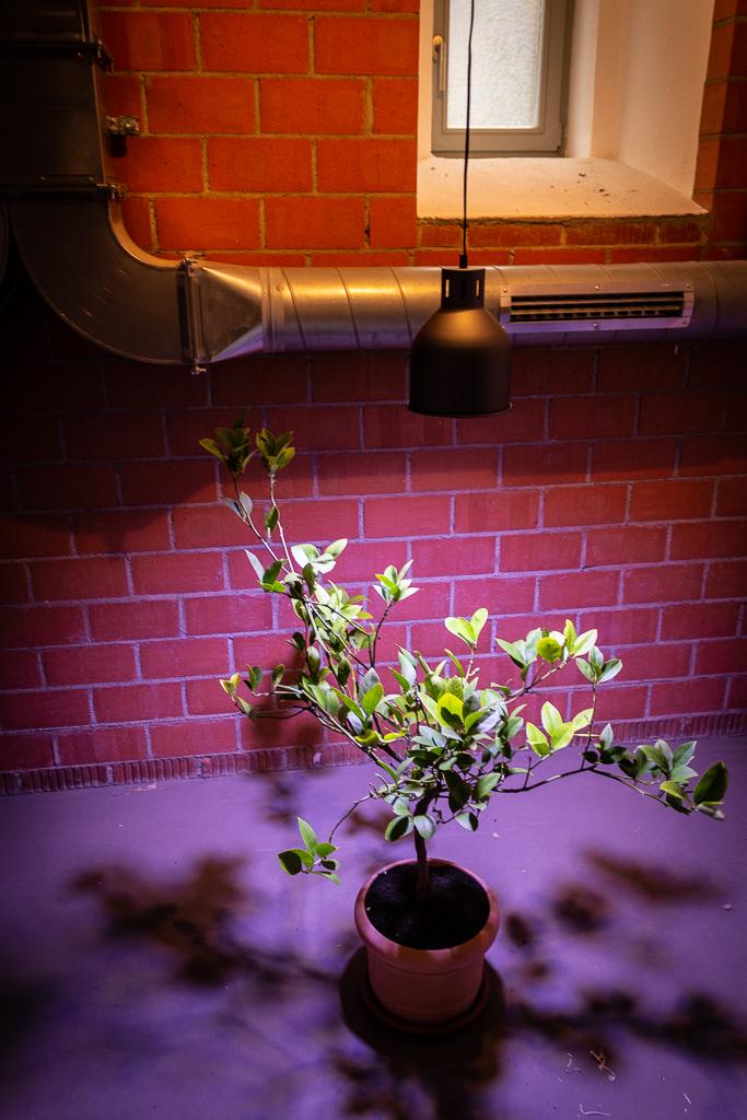 zitruspflanzen-ueberwintern