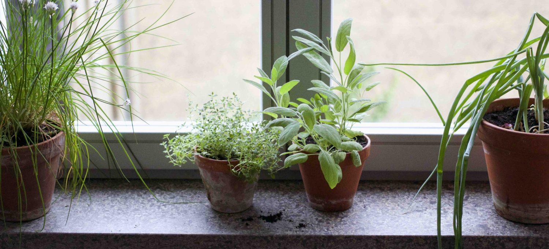 Die 3 besten Tipps für Kräuter auf der Fensterbank - Garten Fräulein - Der Garten Blog
