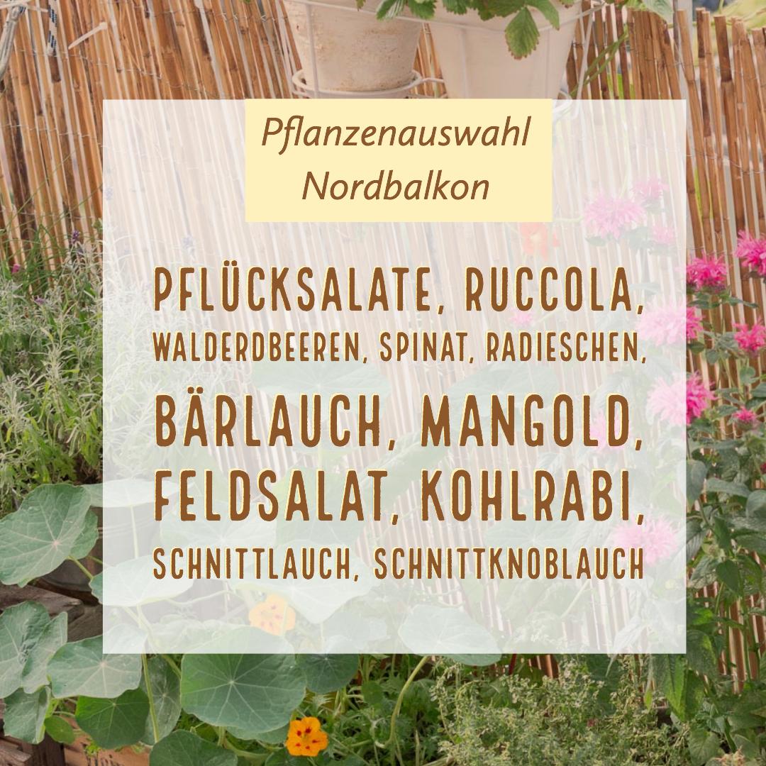 Garten Fräulein: Pflanzenauswahl-Nordbalkon