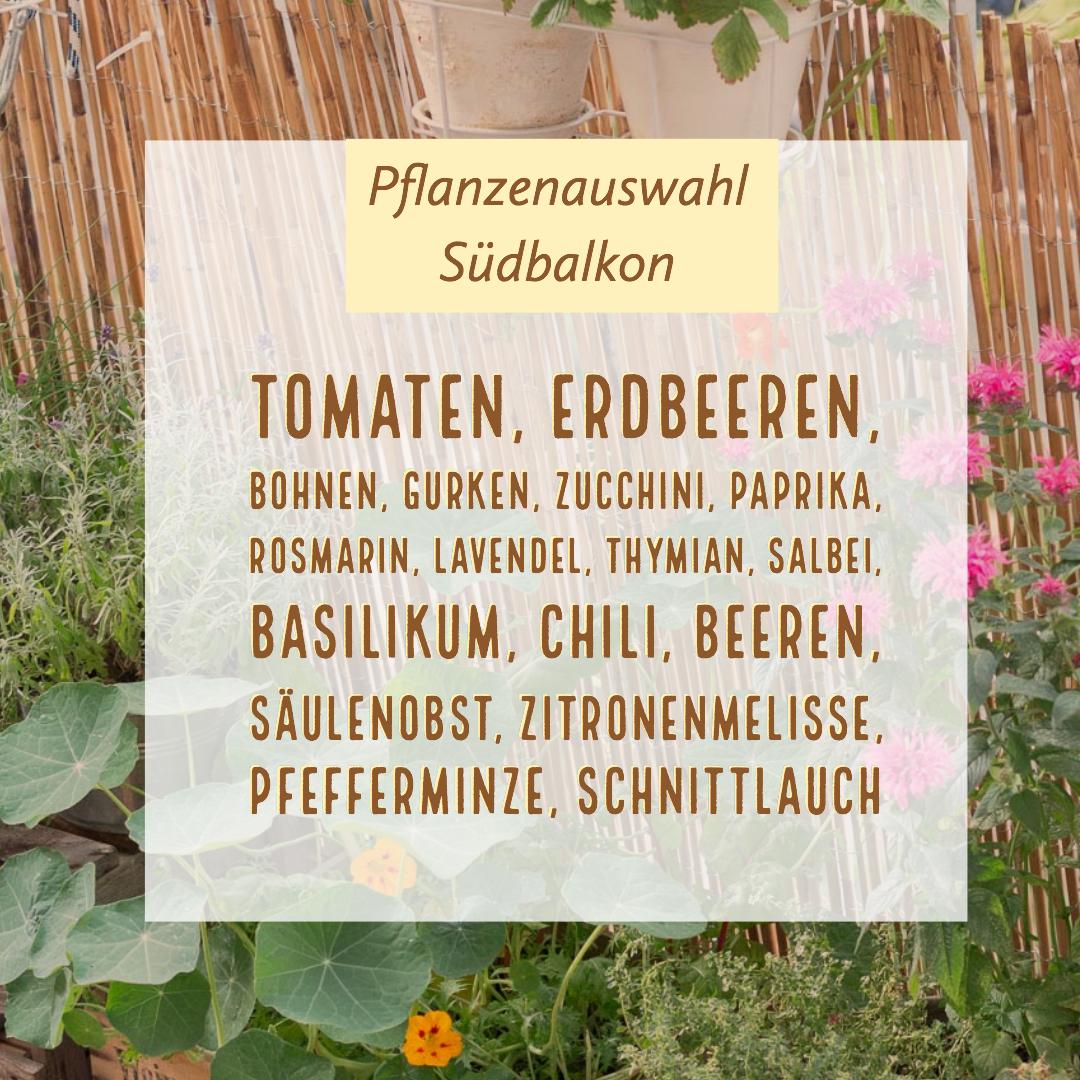 Garten Fräulein: Pflanzenauswahl-Suedbalkon