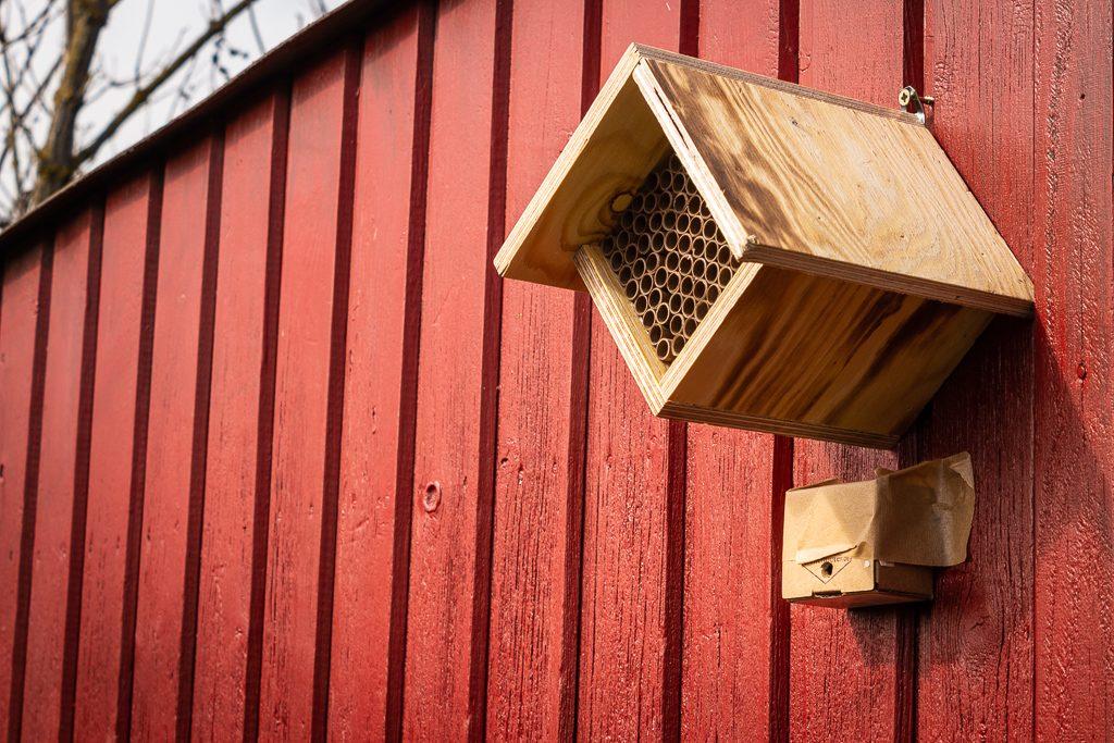 Wildbienen ansiedeln