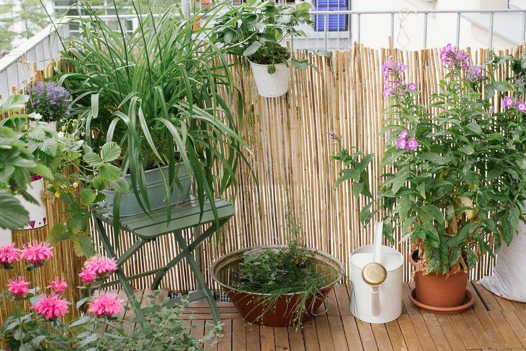 Garten Fraulein Der Garten Blog